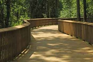 A winding boardwalk on the Edgeley Grove trail section