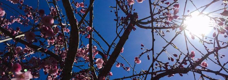 Friends-Pond-Island-Tree-Bloom